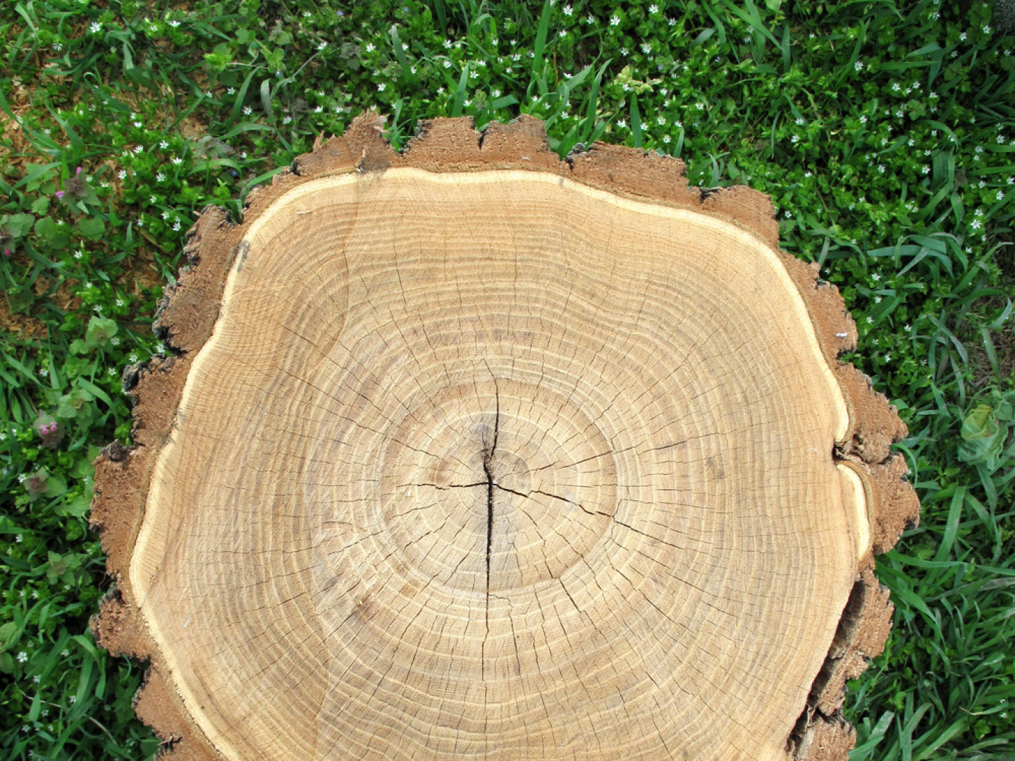 Get Rid of Your Tree Stump Before It Causes Problems